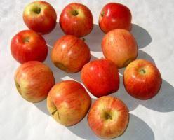 Äpfel / Elstar Frankreich