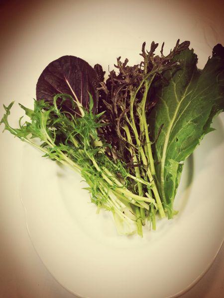 Schnittsalat rot/grün